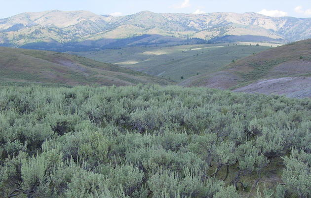 Sagebrush Ecosystem Initiative