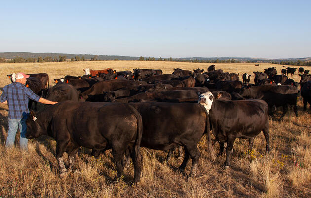 Conservation Ranching During the Pandemic