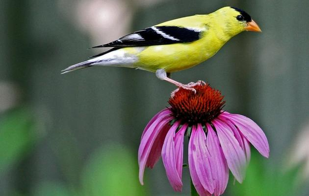 National Audubon Society - Native Plants for Birds