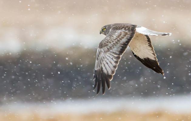 Join the Audubon Christmas Bird Count