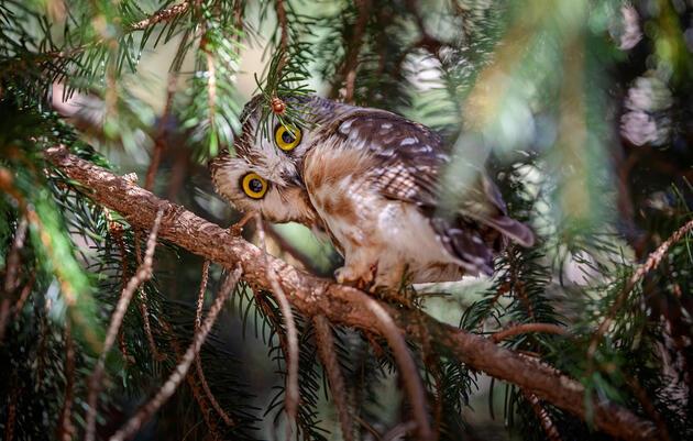 Audubon Afterschool