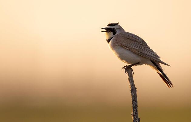 Audubon Rockies' Blog