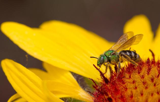 Cool Colorado Bees