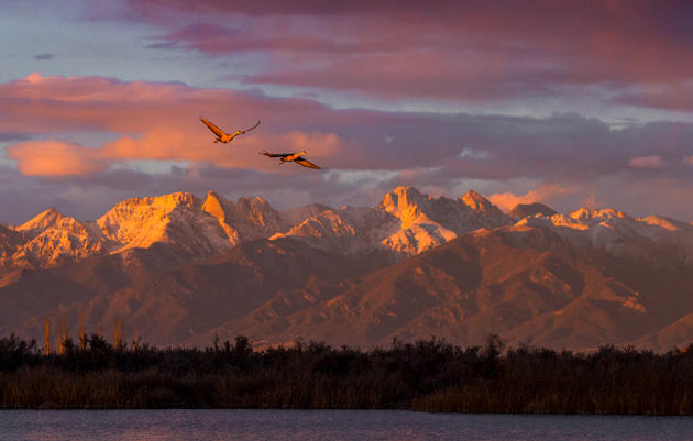 The San Luis Valley Crane Migration