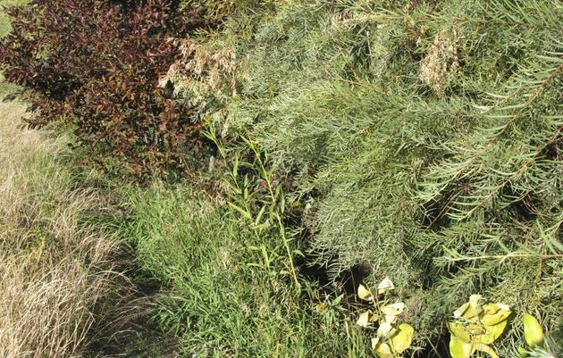 Favorite Plants from Habitat Hero Gardens