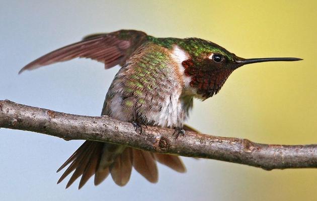 Tiny Bird, Big Appetite