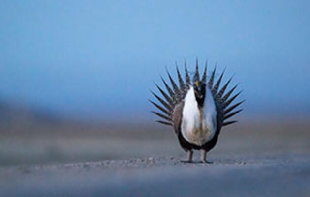 Converse County Oil and Gas Project Poses Serious Threats to Raptors, Sage-Grouse
