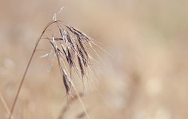 Cheatgrass Management Handbook