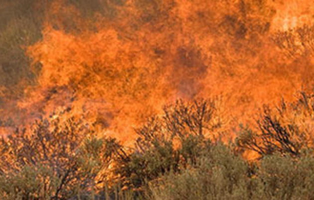 Invasive Weeds and Wildland Fire