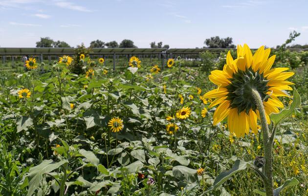 New Solar Garden in Johnstown