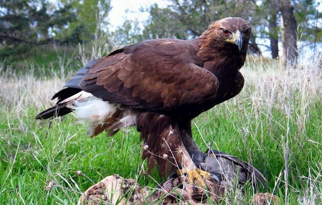 Ways to Help Audubon Rockies
