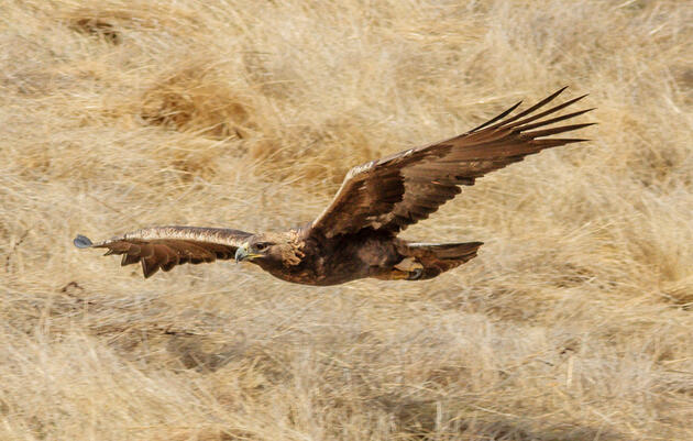 Please Donate to Audubon Rockies