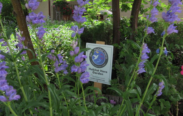 CERTIFY YOUR BIRD-FRIENDLY GARDEN – APPLY TO BECOME A HABITAT HERO