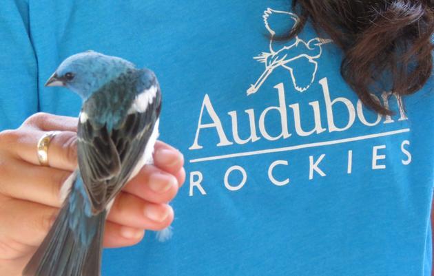 Keyhole Bird Banding
