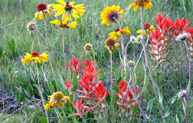 Resources: Plant, Bird, Insect Identification