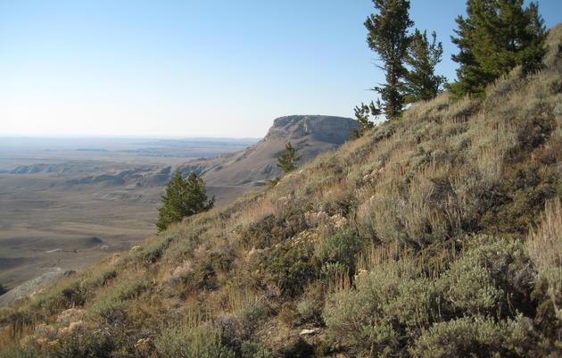 Wyoming Habitat Flashcards