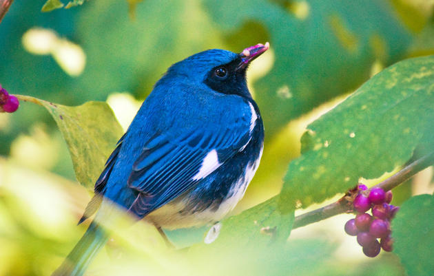 Bird-Friendly Plants FAQ