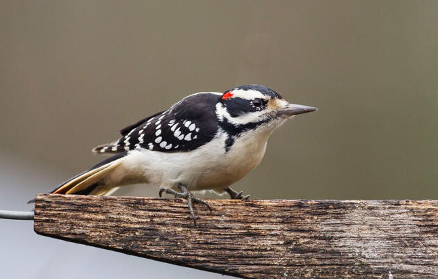 Get to Know These 20 Common Birds