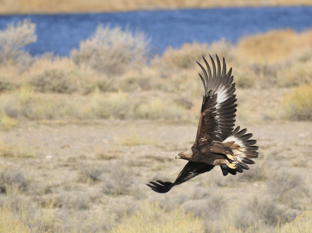 Help the Sagebrush Ecosystem