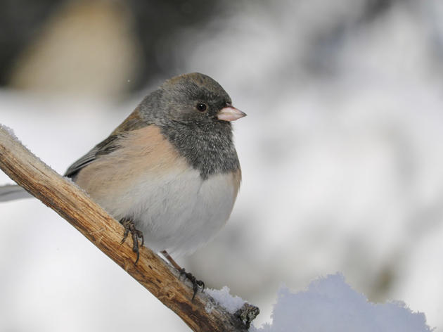 The 119th Christmas Bird Count in Pagosa Springs