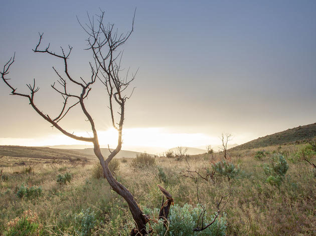 Cheatgrass, Fire, and Sagebrush