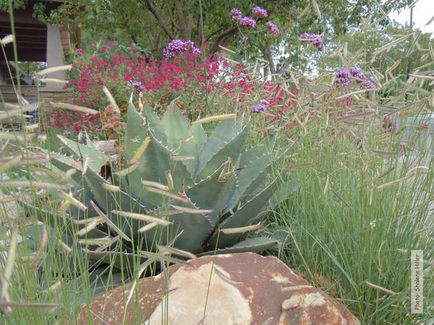 The Gift of Inspiration--Habitat Hero Gardens