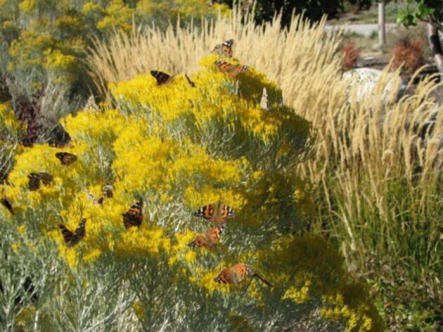 Meet the 2013 Habitat Hero Gardens!