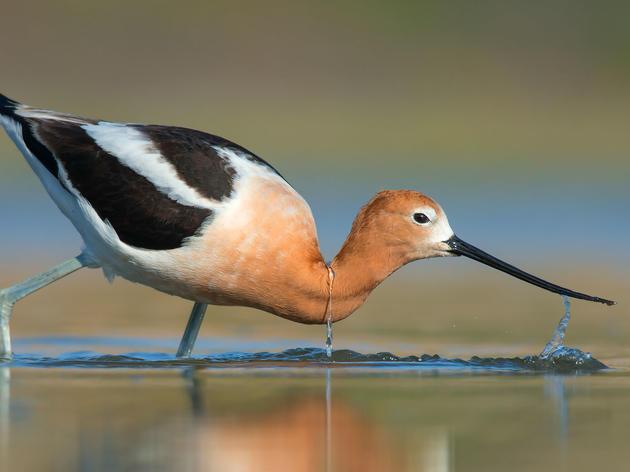 Grand Valley Audubon's Wetlands Restoration Project Is Underway