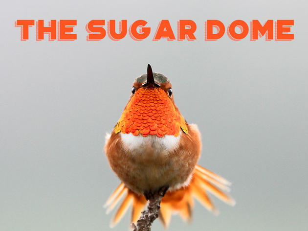 The Sugar Dome