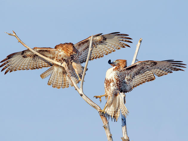 BLM Proposes Dropping Raptor Protections in Massive 5,000 Well Project in Eastern Wyoming