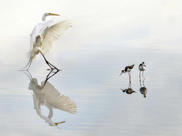 Utah Joins Audubon Rockies