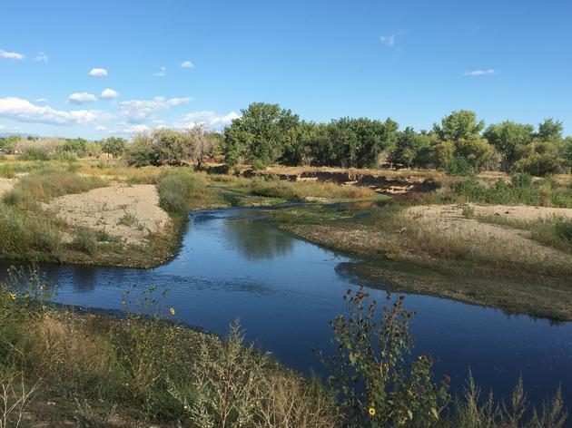 Rockies' Riparian and Wetland Restoration Work: