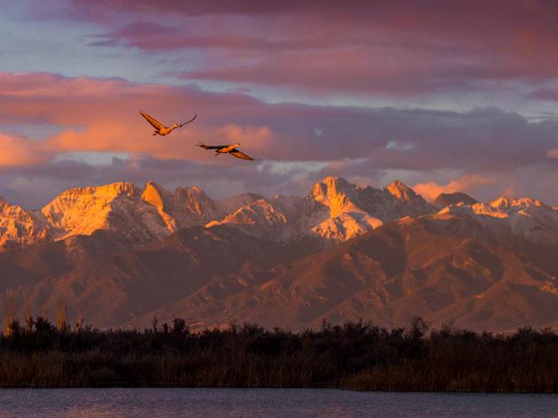 The San Luis Valley Crane Migration