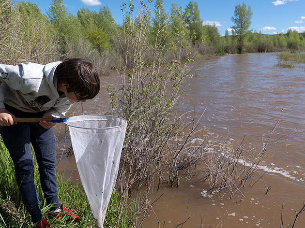 Get to Know Local Macroinvertebrates