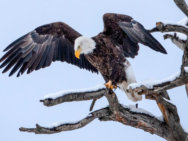 The Pagosa Springs 2020 Christmas Bird Count