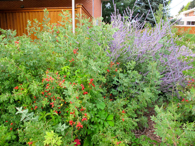 Garden for the homeless