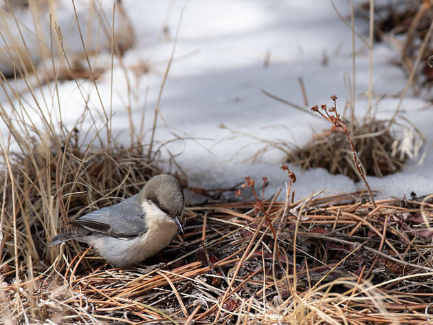 121st Christmas Bird Count tallies 4,746 birds, 67 species