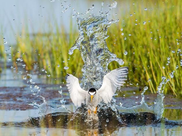 Extension Needed for Protection of Interior Least Tern, Piping Plover, and Whooping Crane