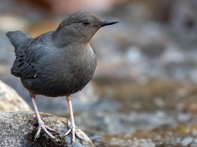 Watch: Birding in Wyoming