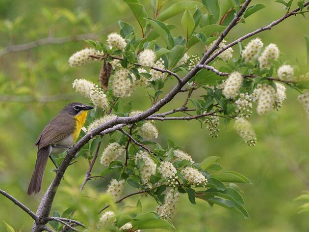 Bird Migration & Your Yard