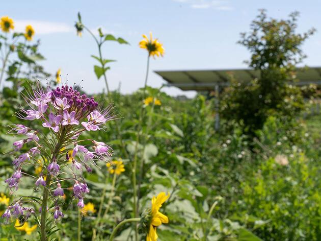Audubon Rockies Abuzz with Longmont Pollinator Garden