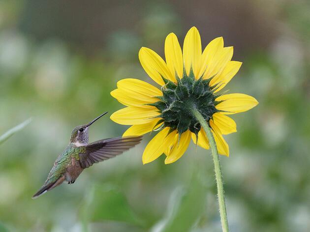 Introducing the Colorado Native Landscaping Coalition