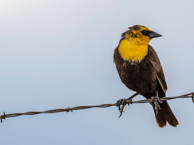 Kremmling Bird Count Studies How Birds Use Irrigated Agriculture