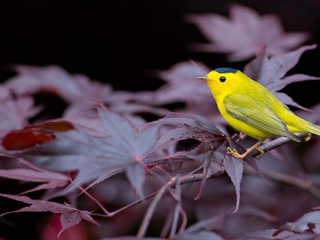 Fall Migrations Begin!