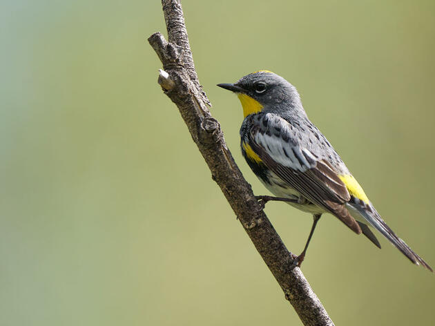 New Program Launches to Save Migrating Birds in Colorado