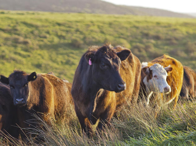 Conservation Ranching Brochure