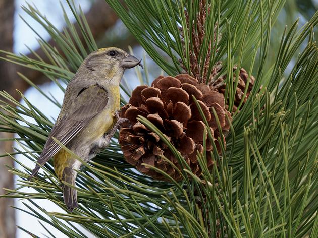 San Juan Bird Surveys Second Year Recap