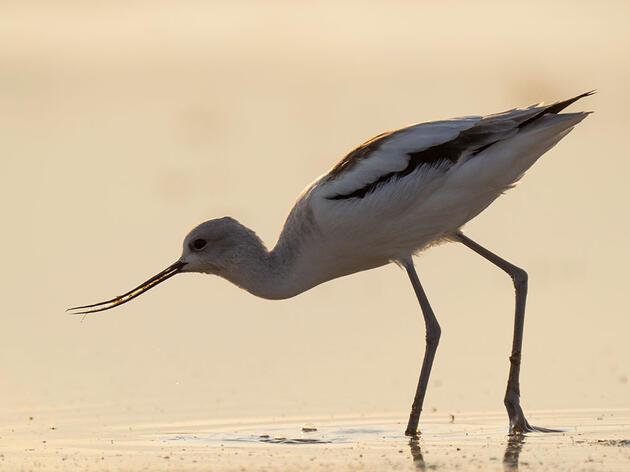 Wetland Habitat Cards