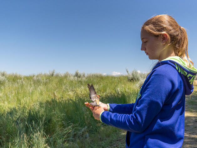 Banding Birds at Twelve Years Old