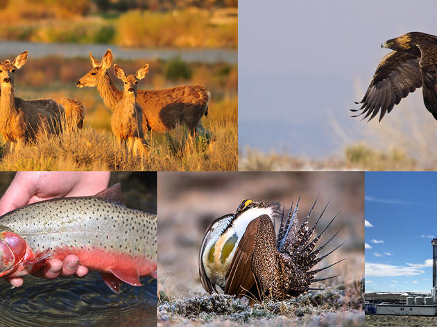 Making Sure Wildlife are Protected in Colorado's Energy Future